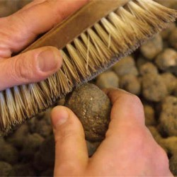 brushing truffles